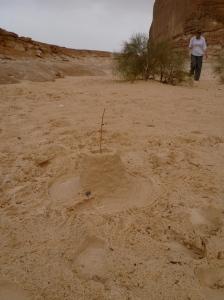 Desert Sancastle