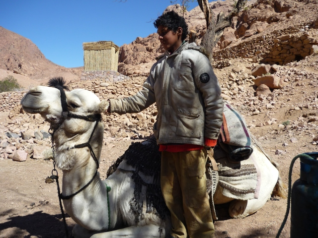 Boy and his camel